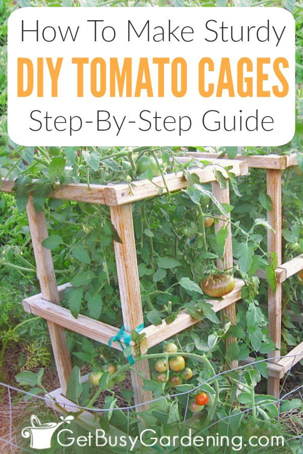 How To Make Sturdy DIY Tomato Cages is part of Diy garden projects, Tomato cages, Garden projects, Fruit garden, Diy garden, Garden planning - These DIY tomato cages are super strong and sturdy, and by far the best you'll ever use  Learn how to make your own tomato cages from wood, stepbystep