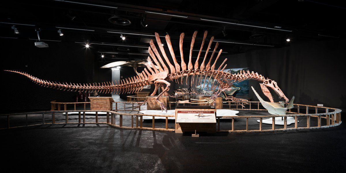Spinosaurus au Museu Ciencies. #prehistoricanimals