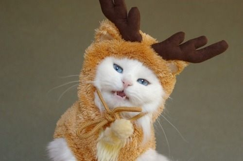 Cats Dressed For Christmas - Google Search & Cat Christmas Costume u0026 Pixie Xmas Outfit