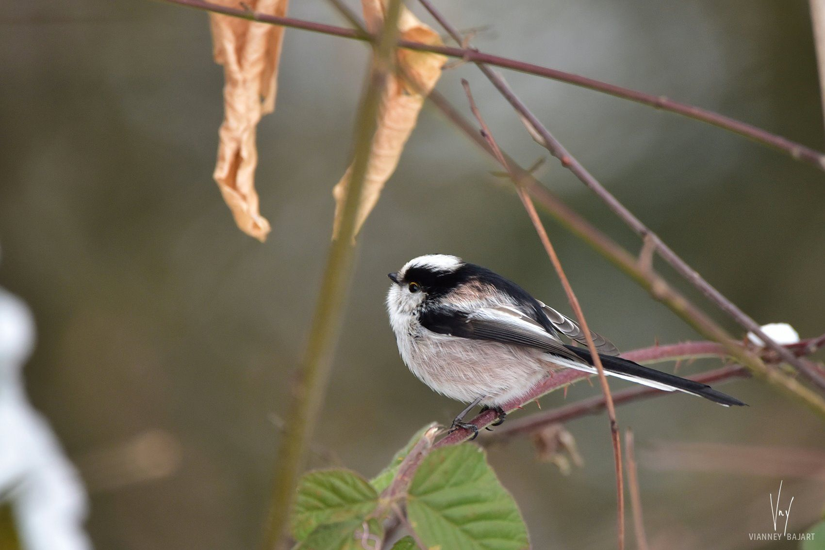 Pin by Audrey K. on Fauna Bird feeders, Outdoor decor