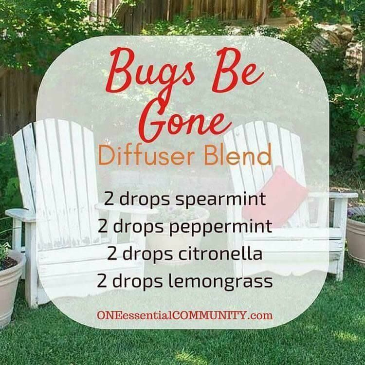 Bugs Be Gone Diffuser Blend Summer Essential Oils Essential Oils Aromatherapy Essential Oil Diffuser Recipes