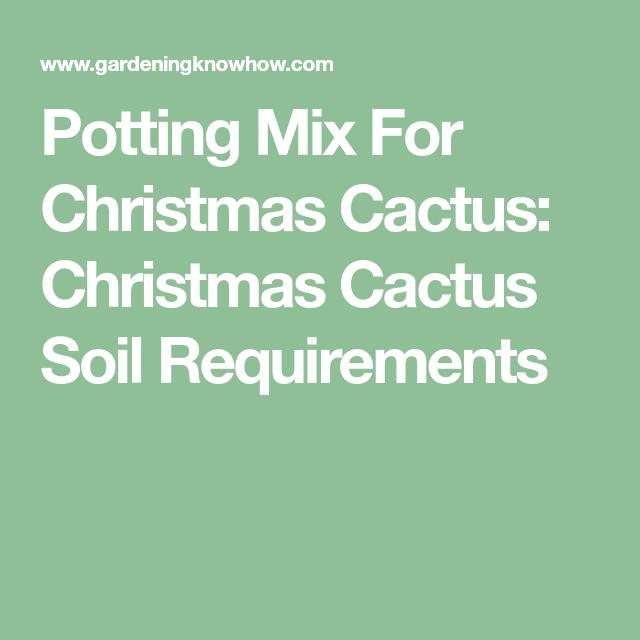 Potting Soil For Christmas Cactus.Potting Mix For Christmas Cactus Christmas Cactus Soil