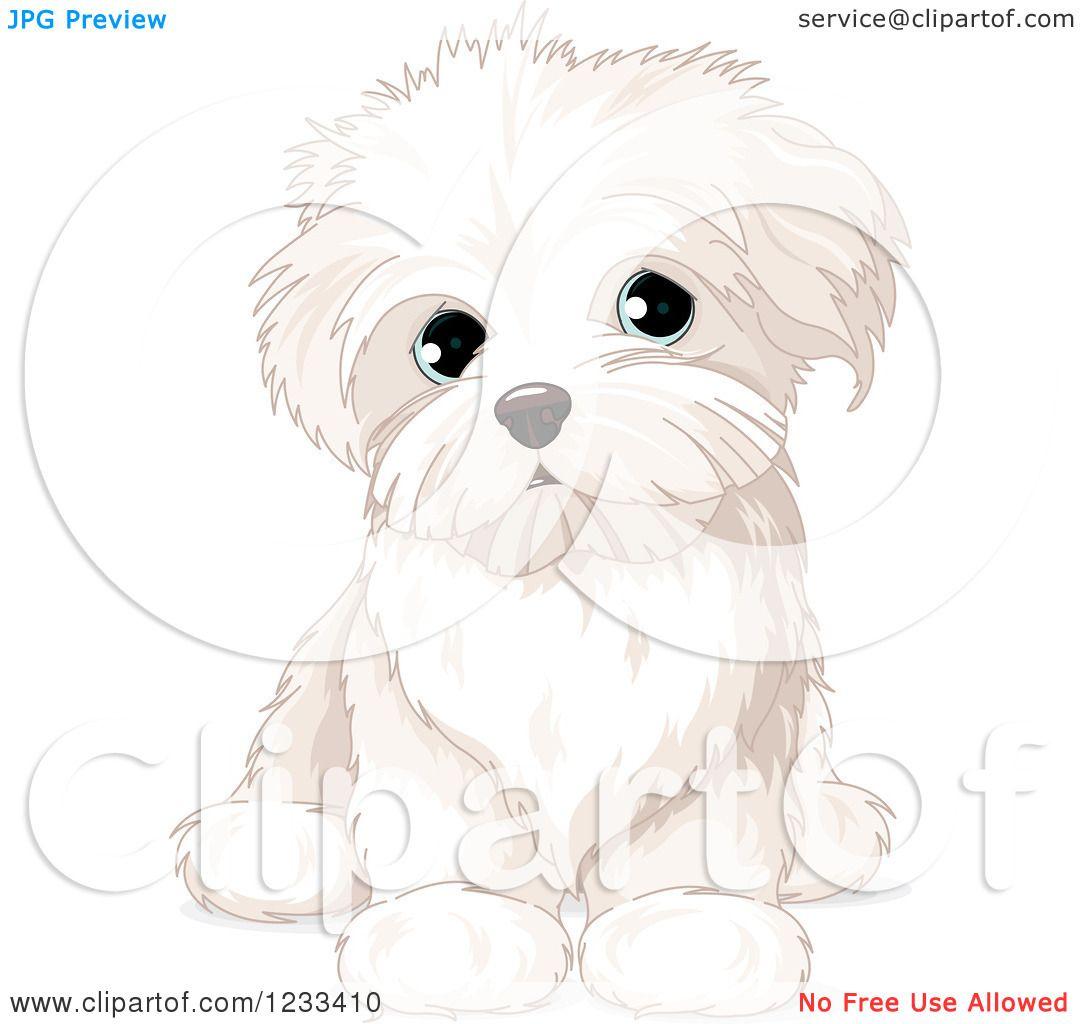 clipart of a cute bichon frise or maltese puppy dog sitting rh pinterest com maltese clipart maltese clipart png