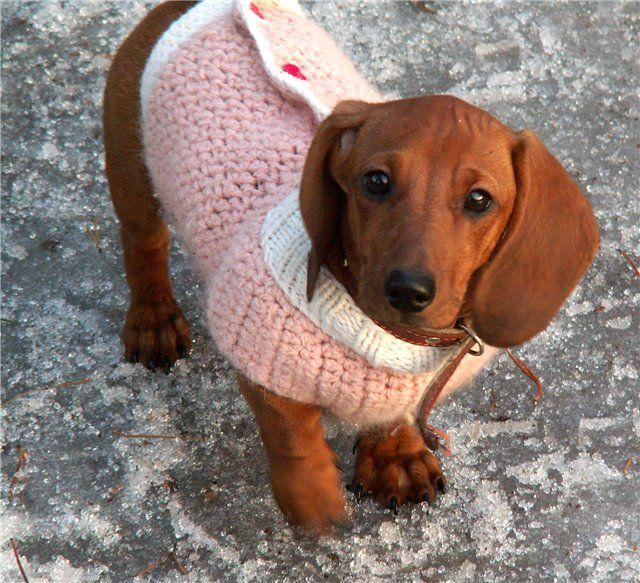 вязаная одежда для собак и шитьё и вязание для собаки Dogs Dog