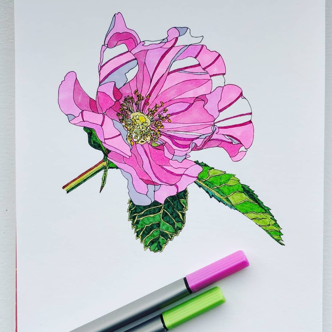 A wild rose flower, drawn with fineliner pens☺️🌸 sketch