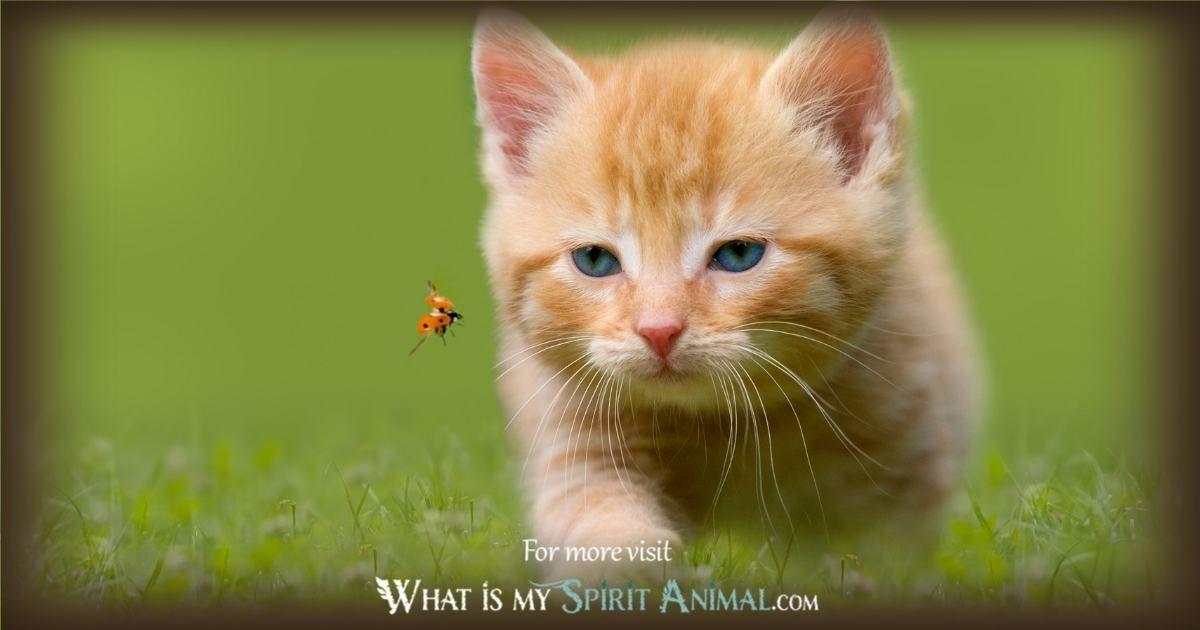 Mammal Symbolism Meaning Kitten Wallpaper Cats Kitten Images