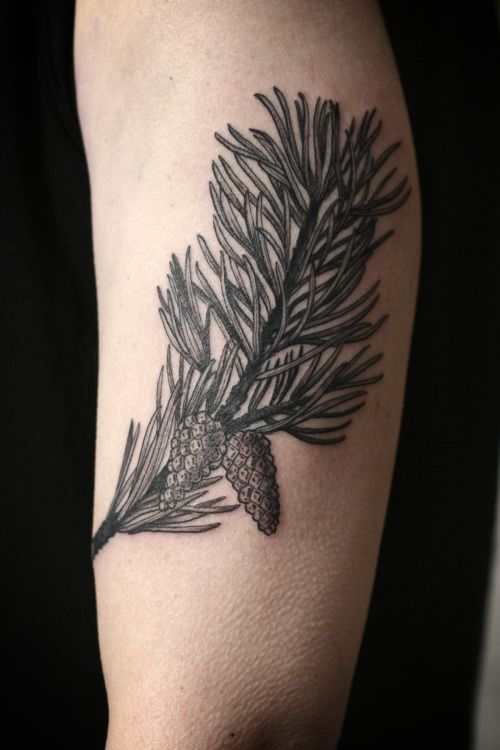 Alice Carrier Is A Tattoo Artist At Wonderland Tattoo In: Pine Tattoo, Fruit Tattoo, Tattoos