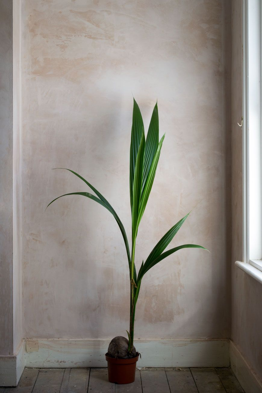 Slow Rituals   A Mindful Approach To Houseplant Care - Curate & Display #urbanjunglebloggers #houseplants #plants