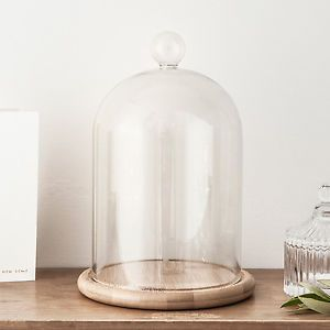 Small Or Large Gl Display Cloche Bell Jar Dome With Wooden Base