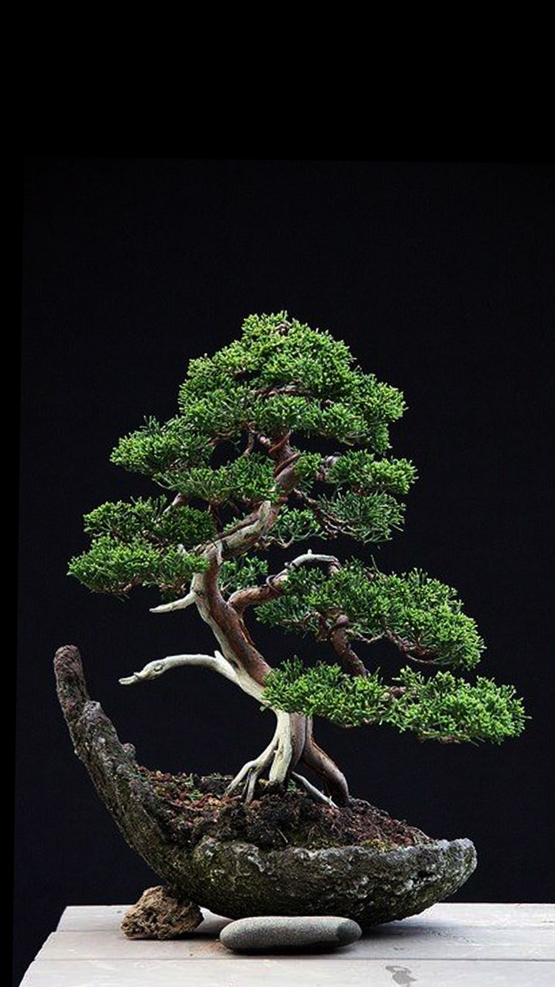 Phone wallpaper from Zedge - Bonsai