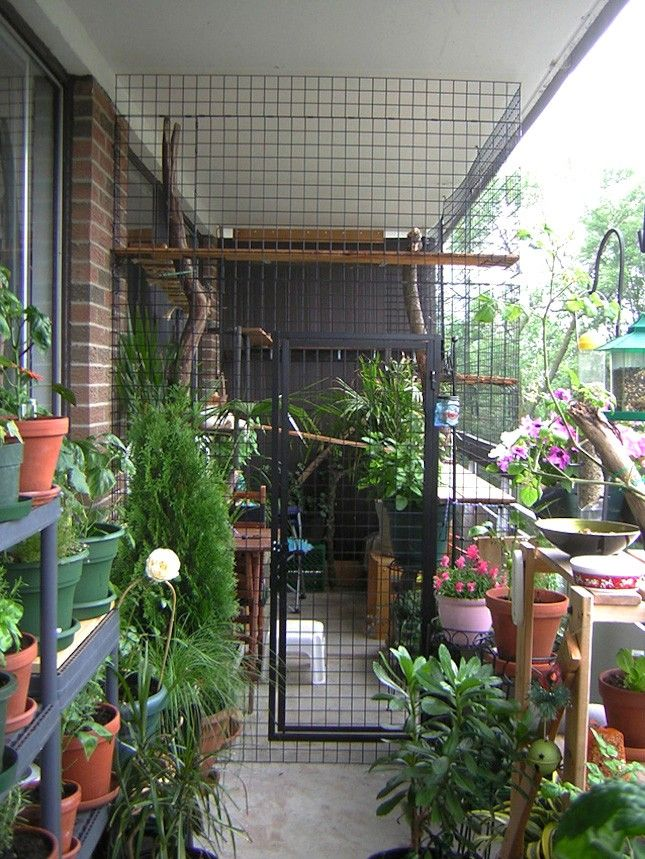 Install Your Catio With Lots Of Cat Safe Plants To Give