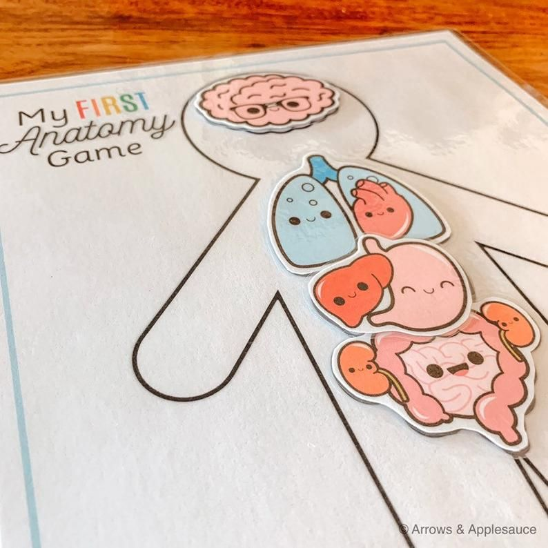 Anatomy Game Printable Human Body Preschool Activity About ...