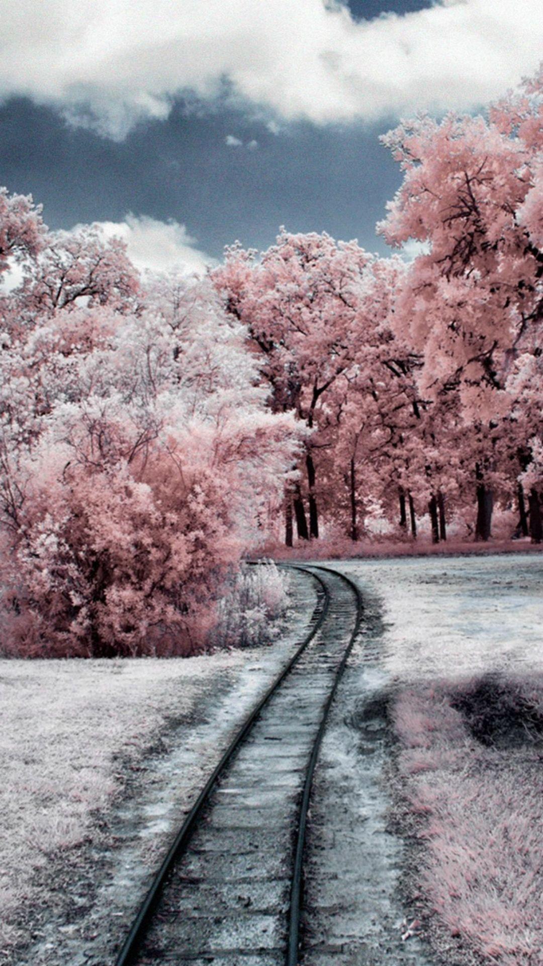 Nature Winter Through Pink Woods IPhone 6 Plus Wallpaper