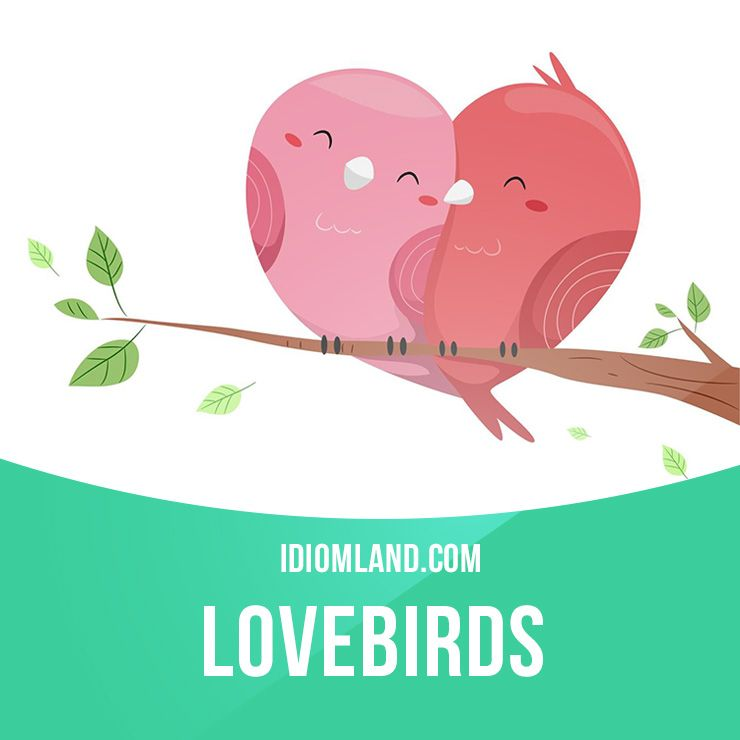 """""""Lovebirds"""" are two people who are obviously very much in love with each other. Example: Look at those two lovebirds holding hands and gazing into each other's eyes. #idiom #idioms #saying #sayings #phrase #phrases #expression #expressions #english #englishlanguage #learnenglish #studyenglish #language #vocabulary #dictionary #grammar #efl #esl #tesl #tefl #toefl #ielts #toeic #englishlearning"""