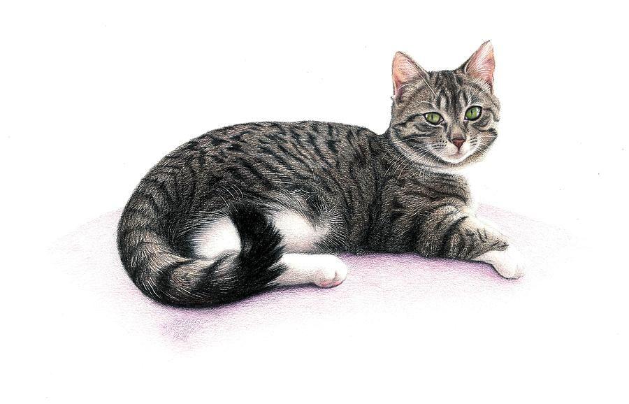 Mandy By Danielle R T Haney Tabby Cat Tabby Kitten Tabby Cat Names