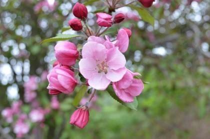 Jessica On Twitter Blossom Cherry Blossom Pink Blossom