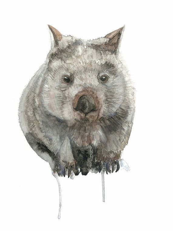 Wombat Watercolour By Winter Owls A3 Australian Animal