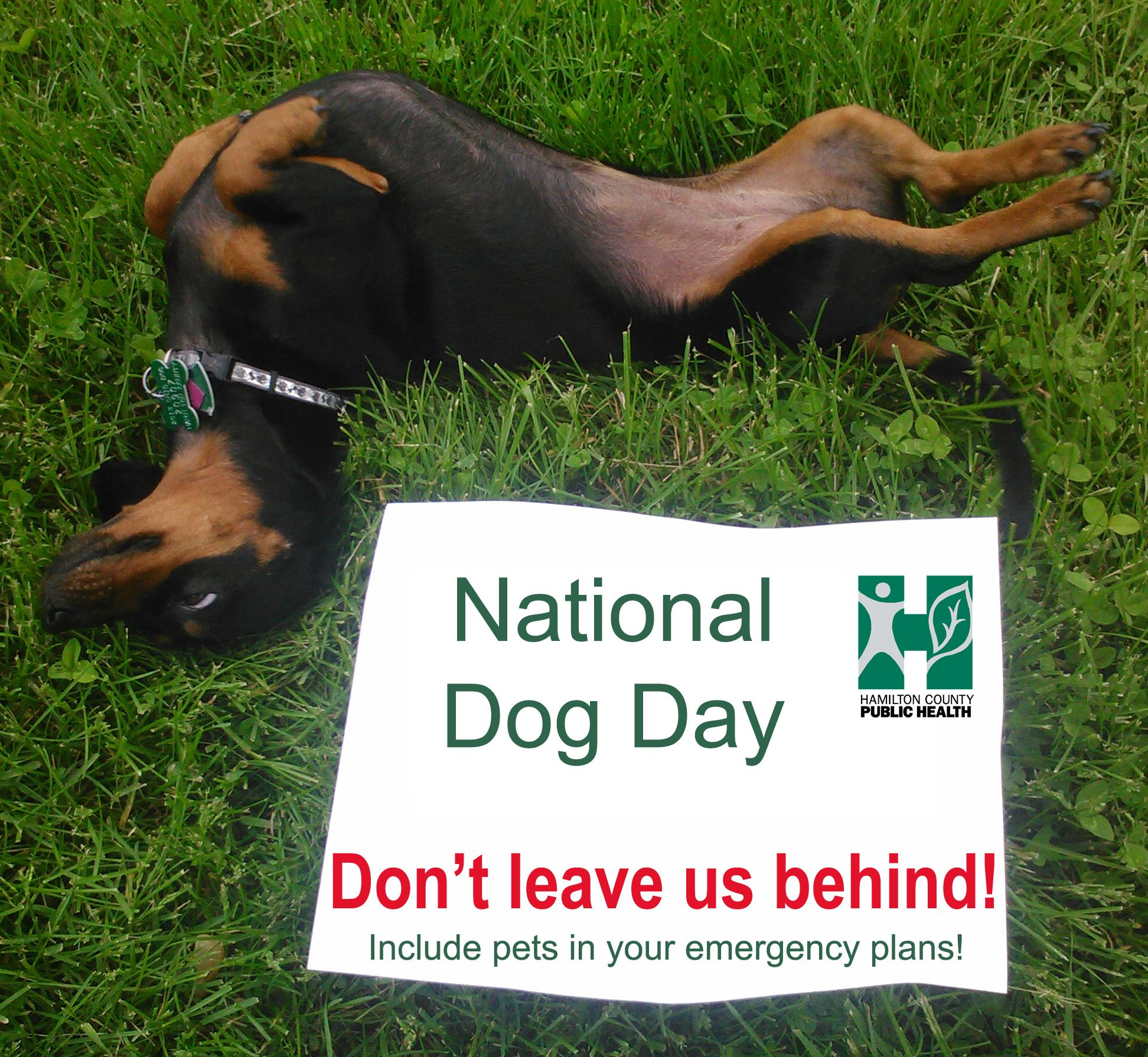 Don T Leave Your Pets Behind Emergencypreparedness National