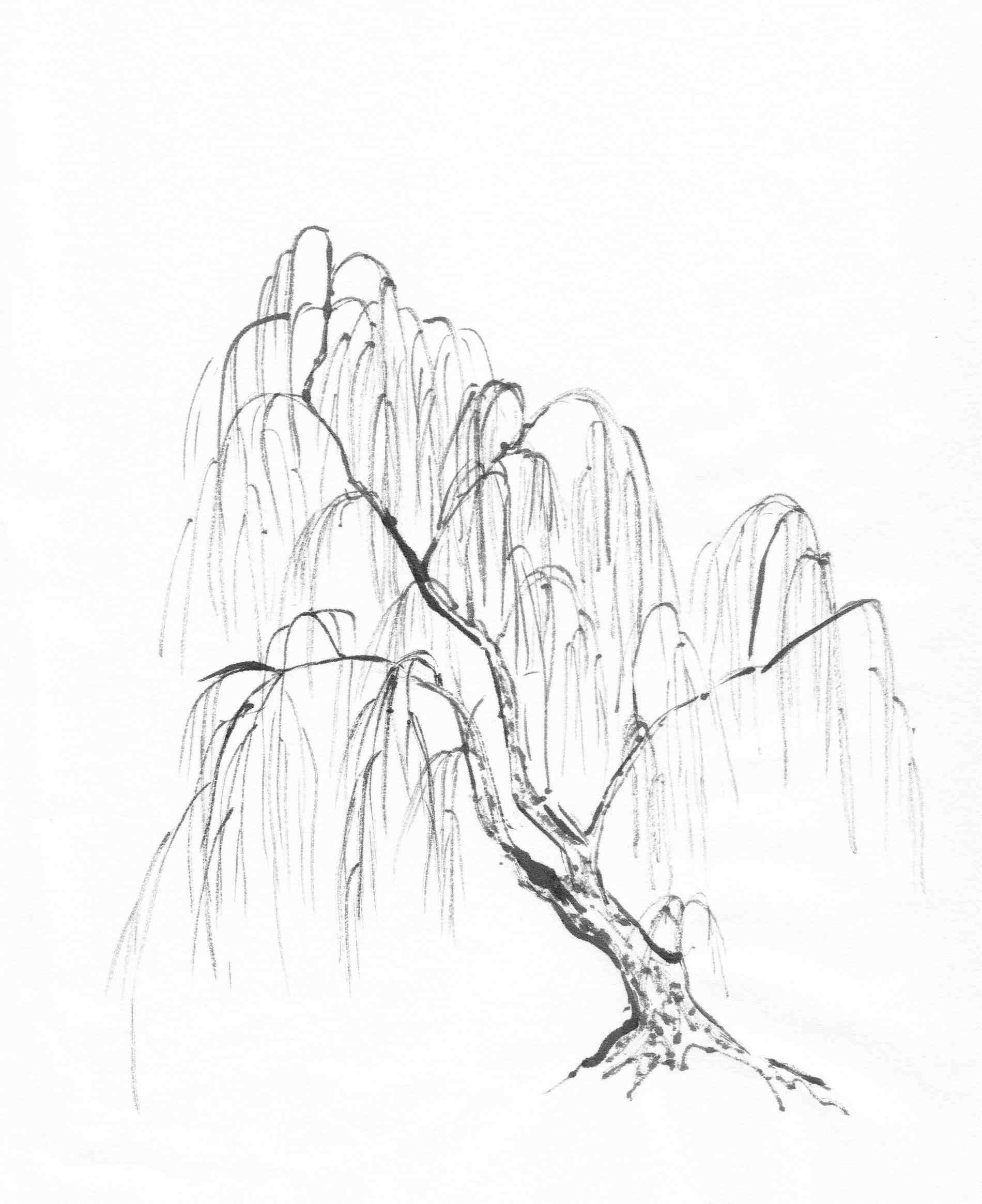 Watercolor Weeping Willow Tree Tattoo Ngorong Club Tattoo Art