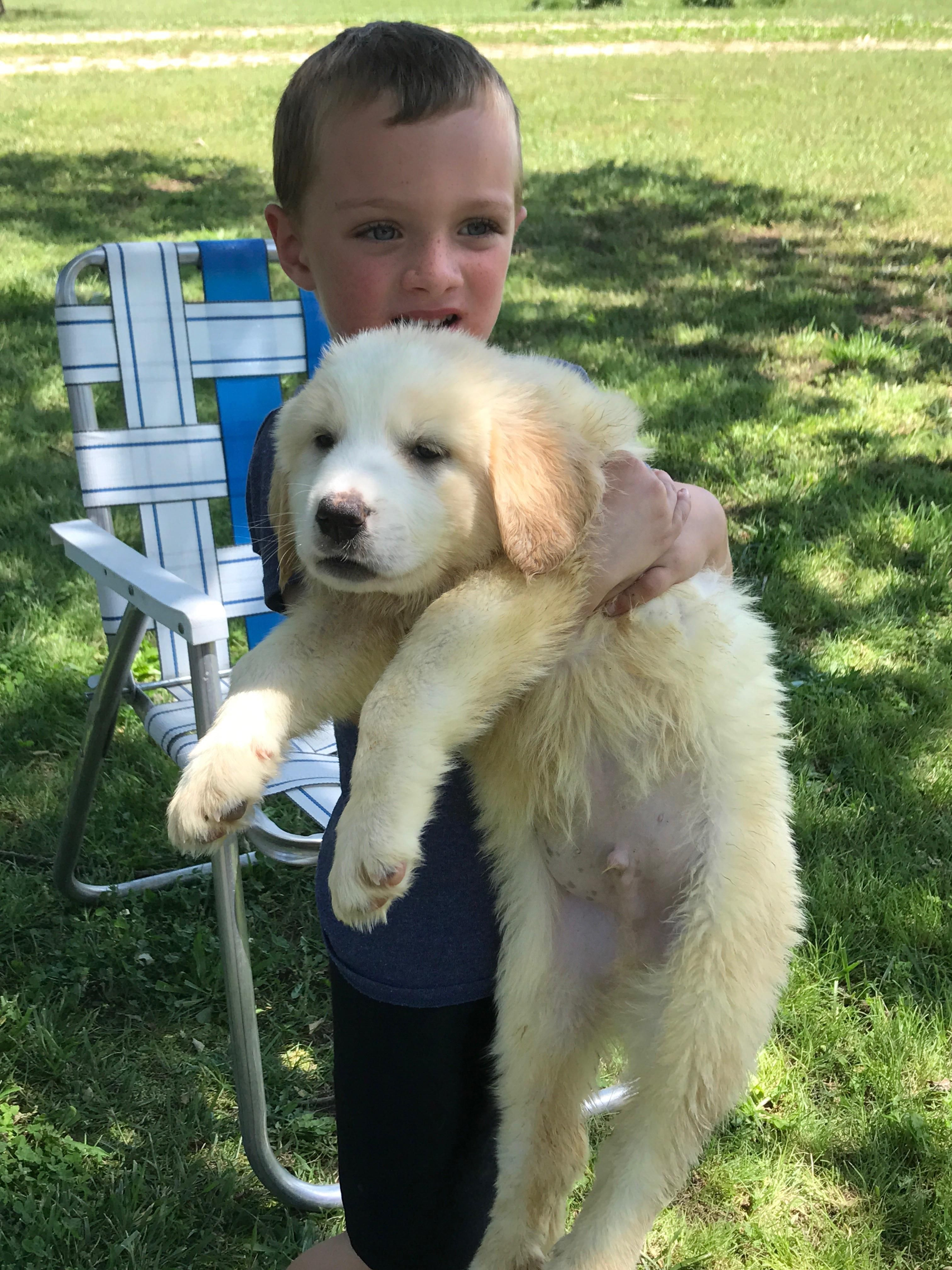 New Puppy From The Shelter Basset Hound Great Pyrenees Mix Http