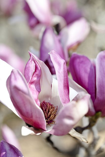 Tree Blooms Of The Garden Missouri Botanical Garden Garden