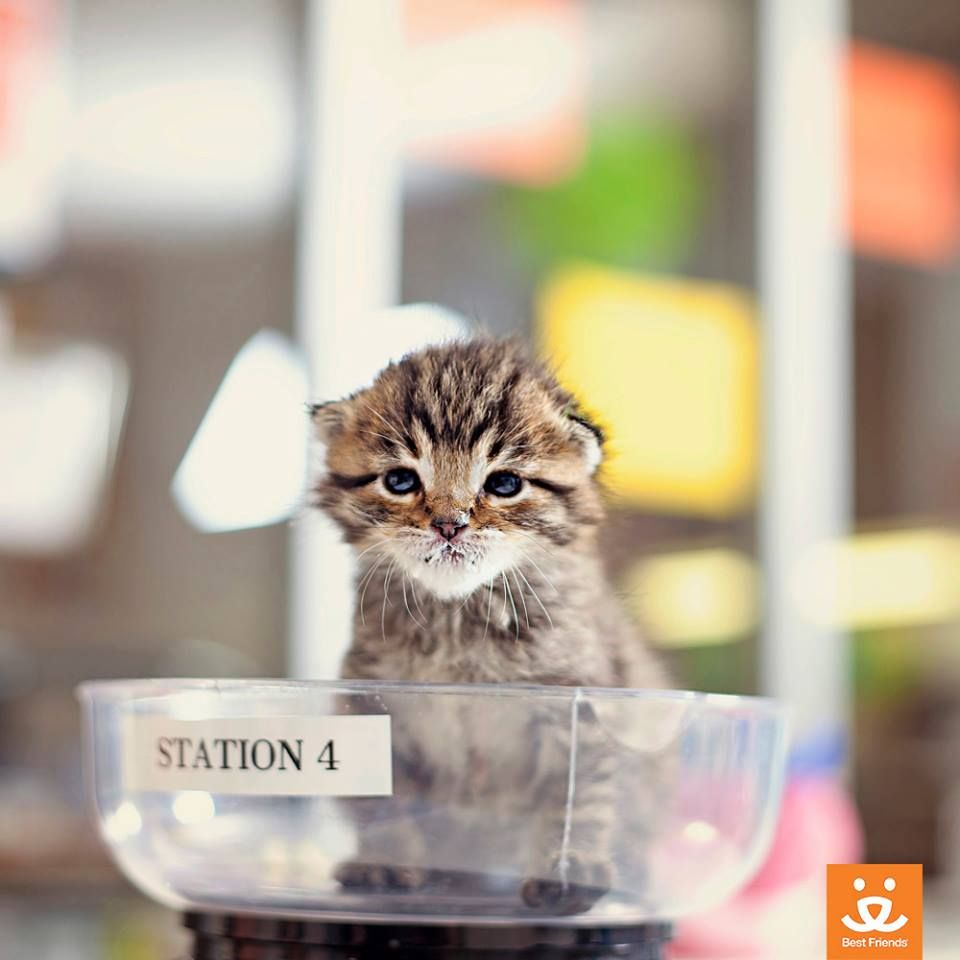 Most Wild Kittens Taken To Shelters Will Be Killed Kittens