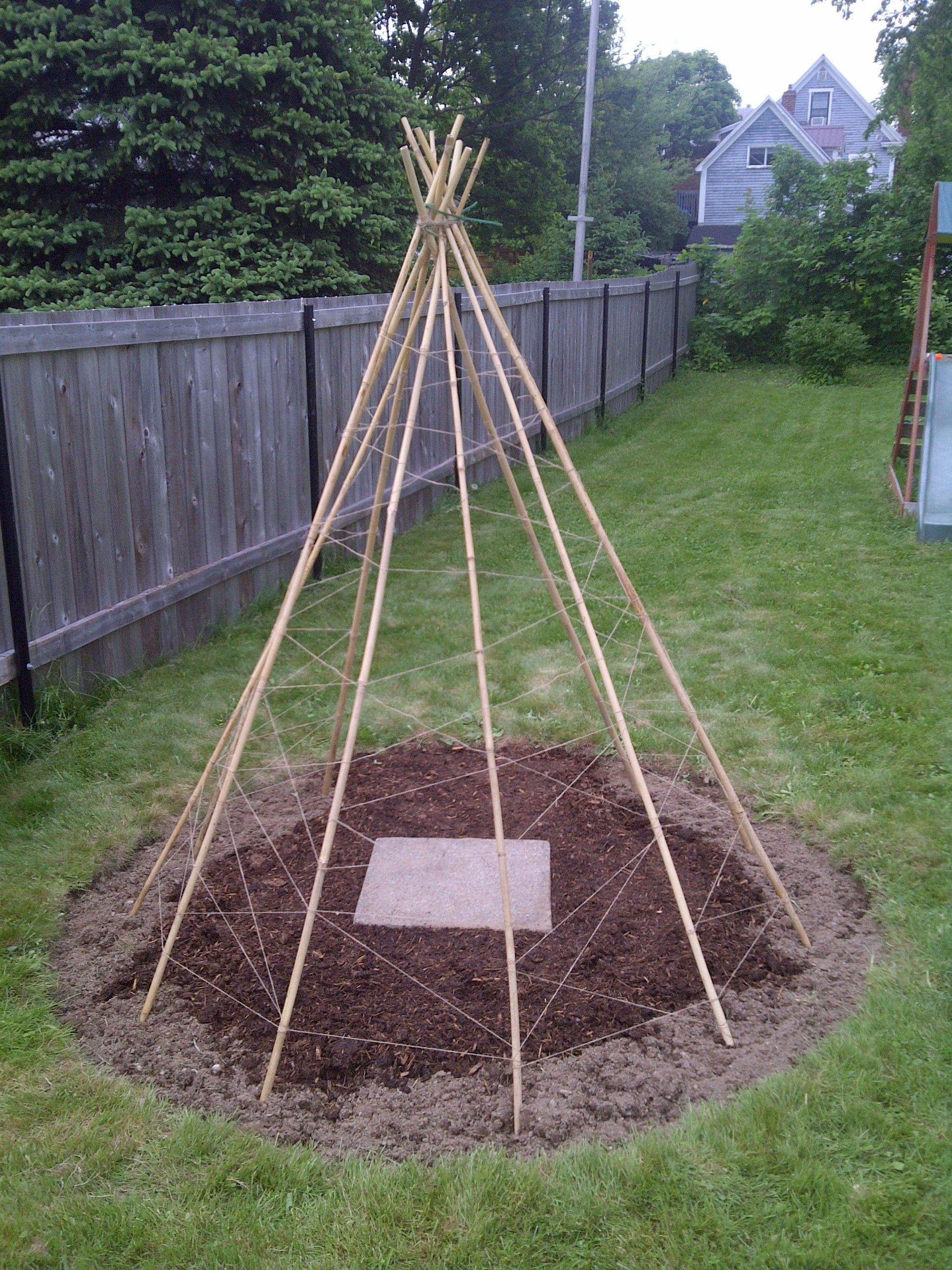 Creation of the Bean Teepee Frame | Beans, Plants and Gardens