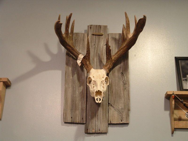 European Mount On Reclaimed Barn Boards Deer Decor Deer Skull Mount Deer Heads Mount