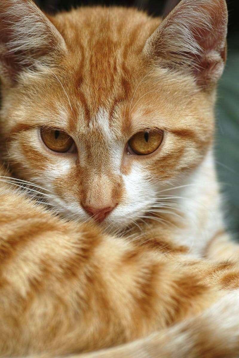 Pin By Ati Ahmad On I Love Cats Orange Tabby Cats Cat Care
