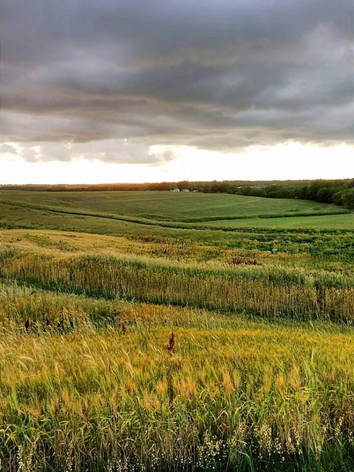 Nebraska field.  Photo credit Rich Alonzo