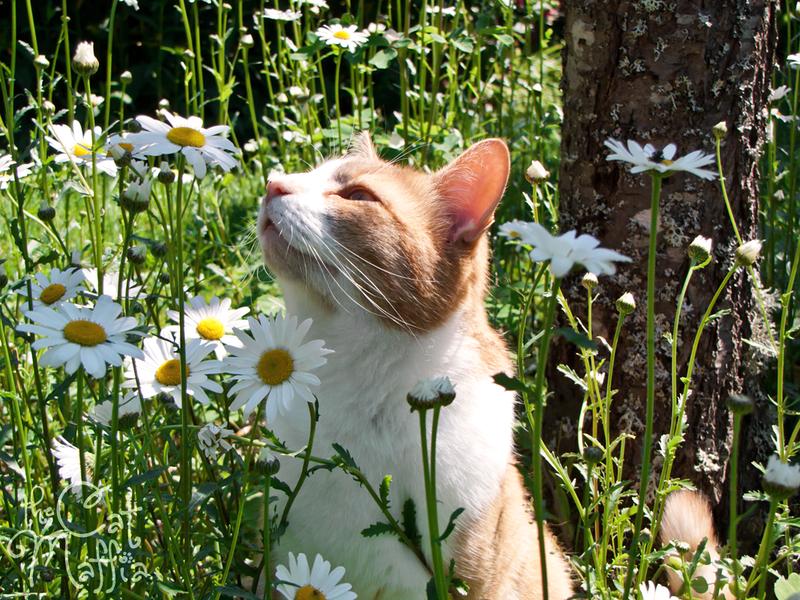 Ahh! It's finally summer! by RavenMontoya on deviantART