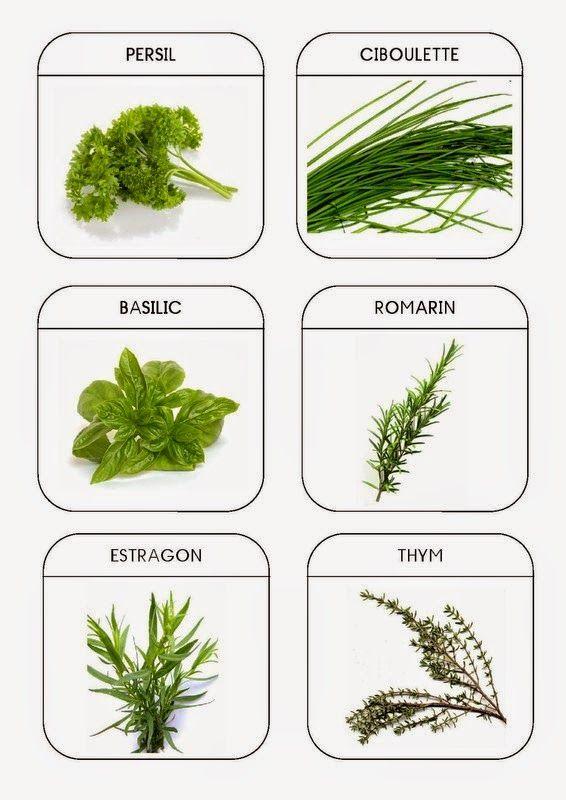 Legumes e plantas arom ticas http nounoulolo88 - Etiquetas para plantas ...