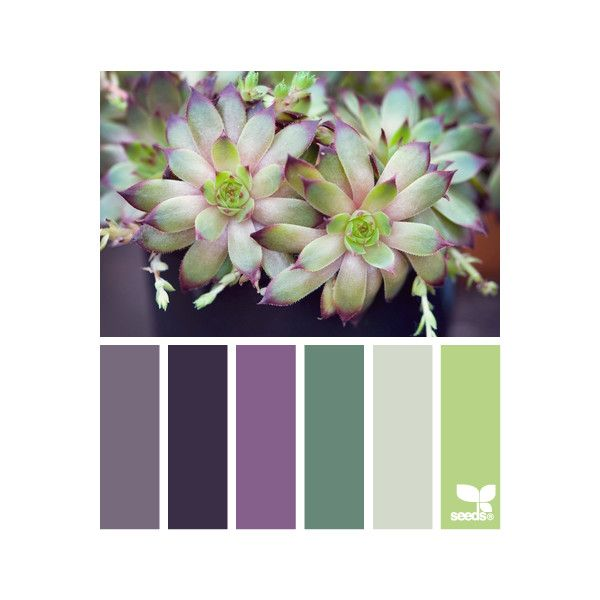 Design Seeds for all who color found on Polyvore