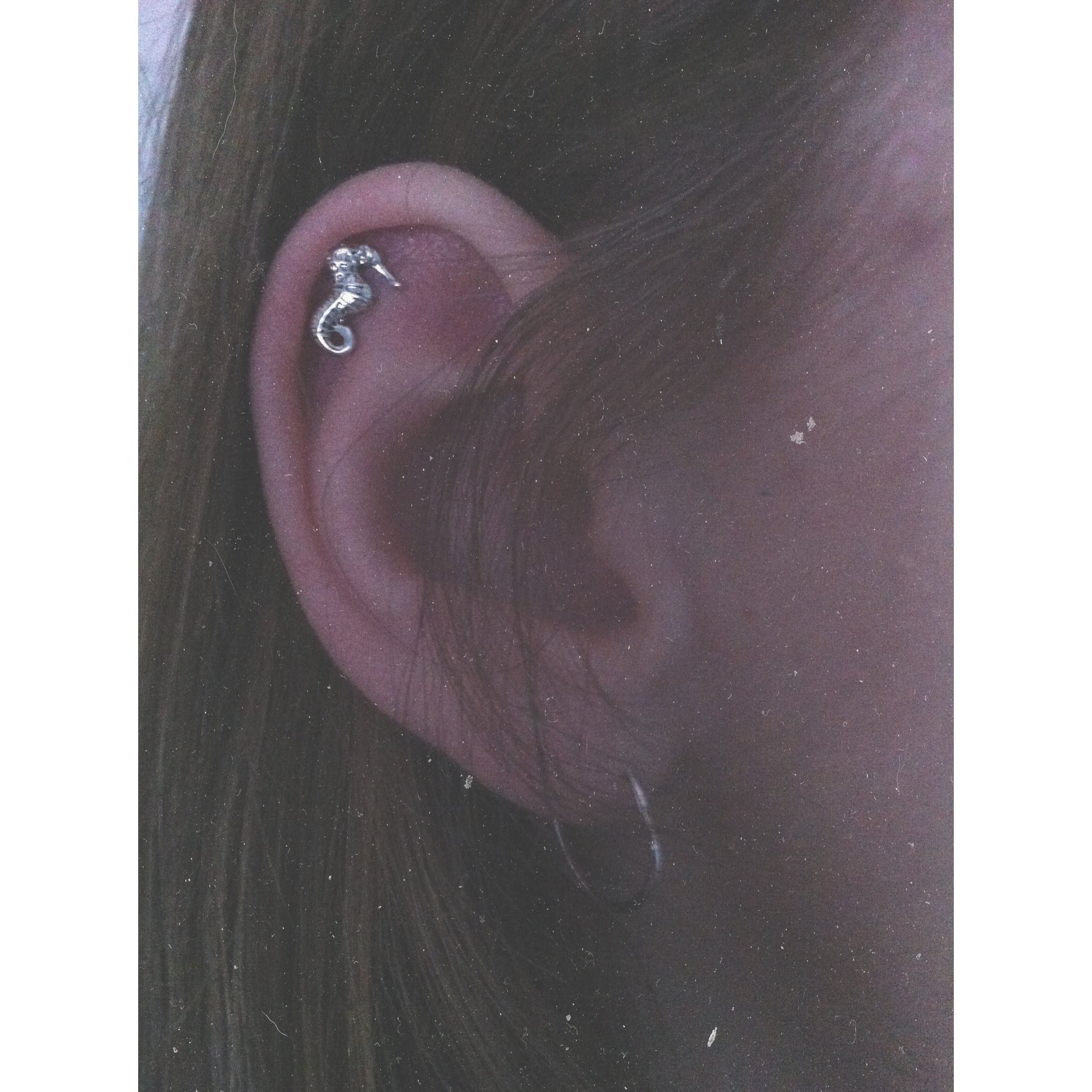Seahorse Cartilage Stud Earring