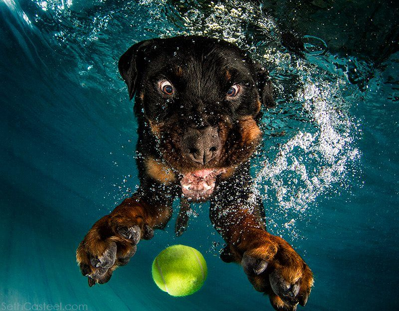 Jump In The Pool And Giggle Uncontrollably With Underwater Dogs