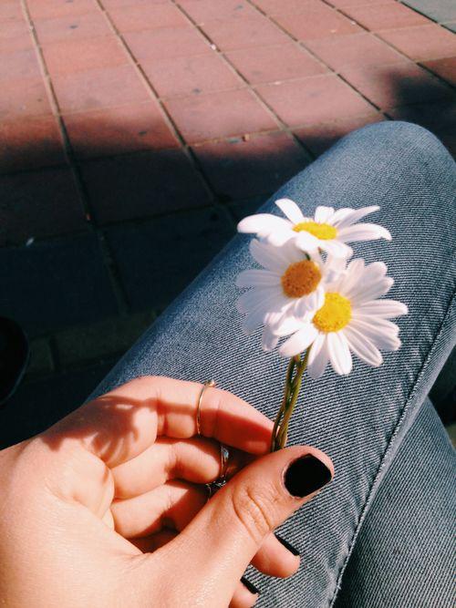 Flor En Sus Manos Fotos Tumblr