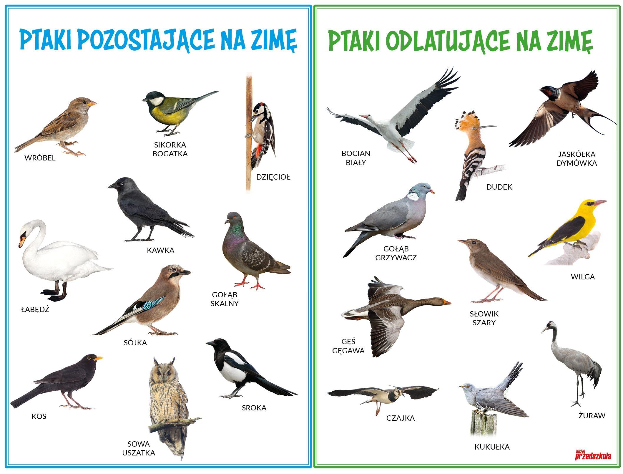 Plakat Jakie Ptaki Zimuja W Polsce Scenariusze Zajec I Artykuly Miesiecznik Blizej Przedszkola Montessori Lessons Activities For Kids Polish Language