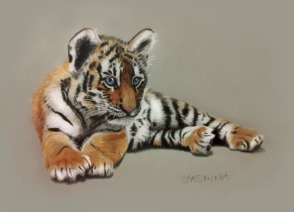 Tiger Cub – Colored Pencils Drawing by JasminaSusak on DeviantArt