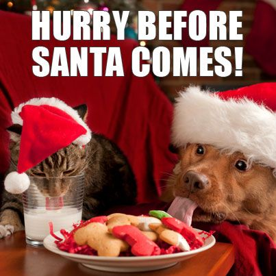 Happy Holidays Christmas Animals Funny Christmas Pictures Pet Holiday