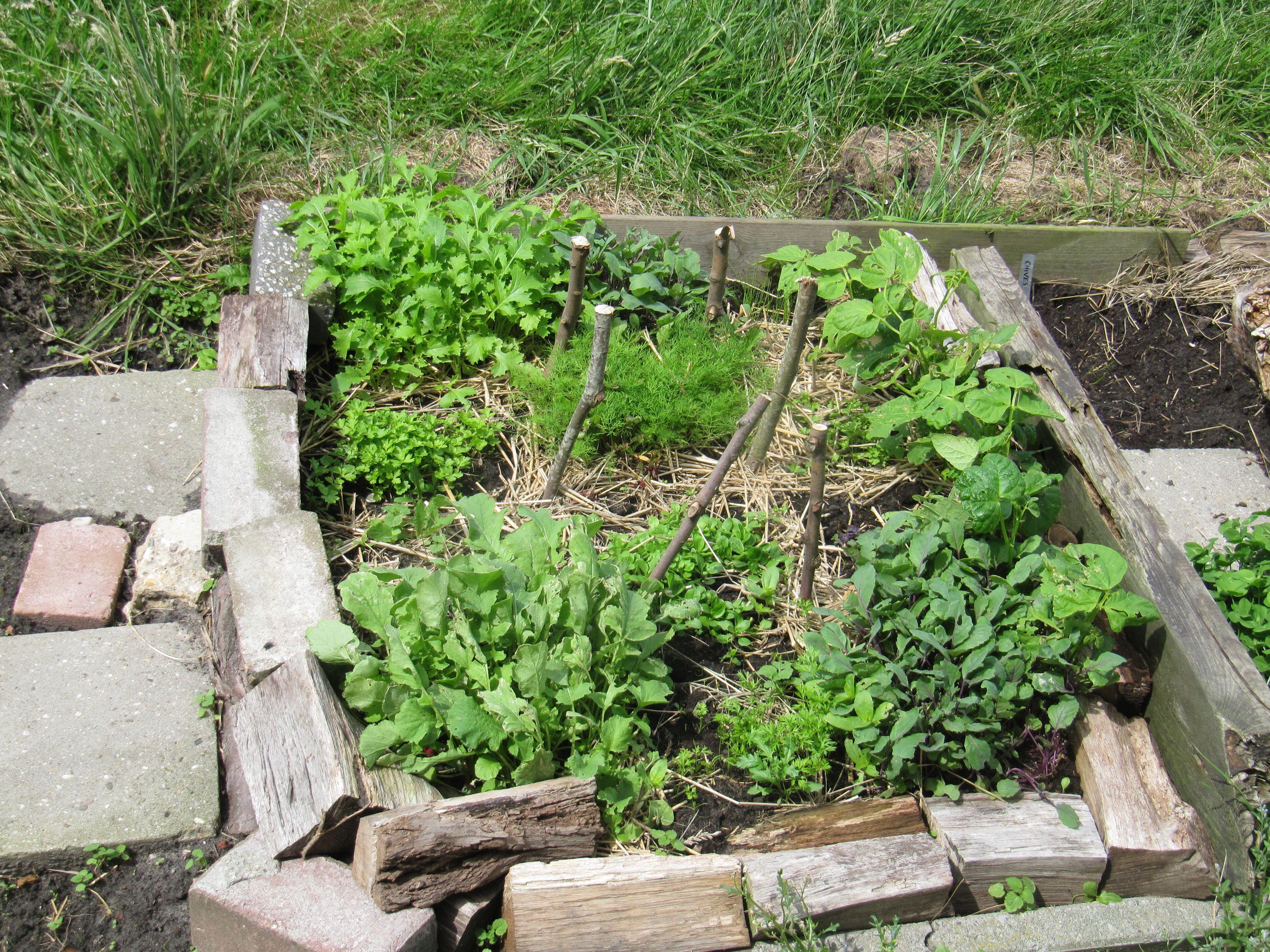 Vierkante Meter Tuin : Aanleggen van een vierkantemetertuin dcm vivimus groenten