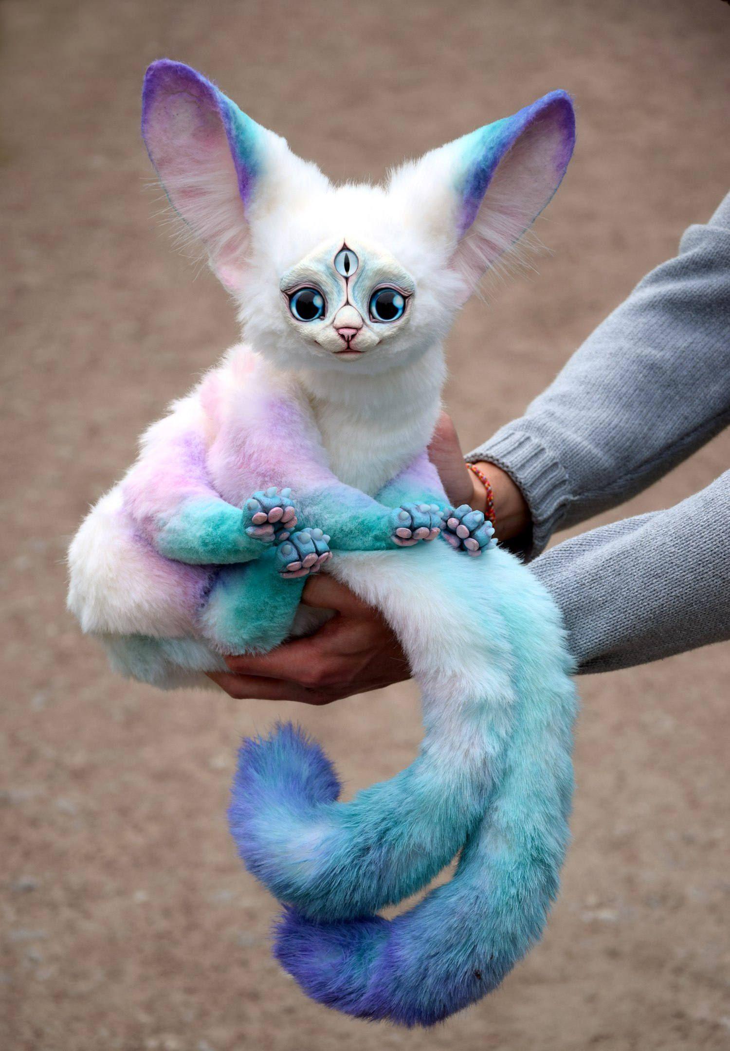 Photo of Eineinhalb Eiskatzen