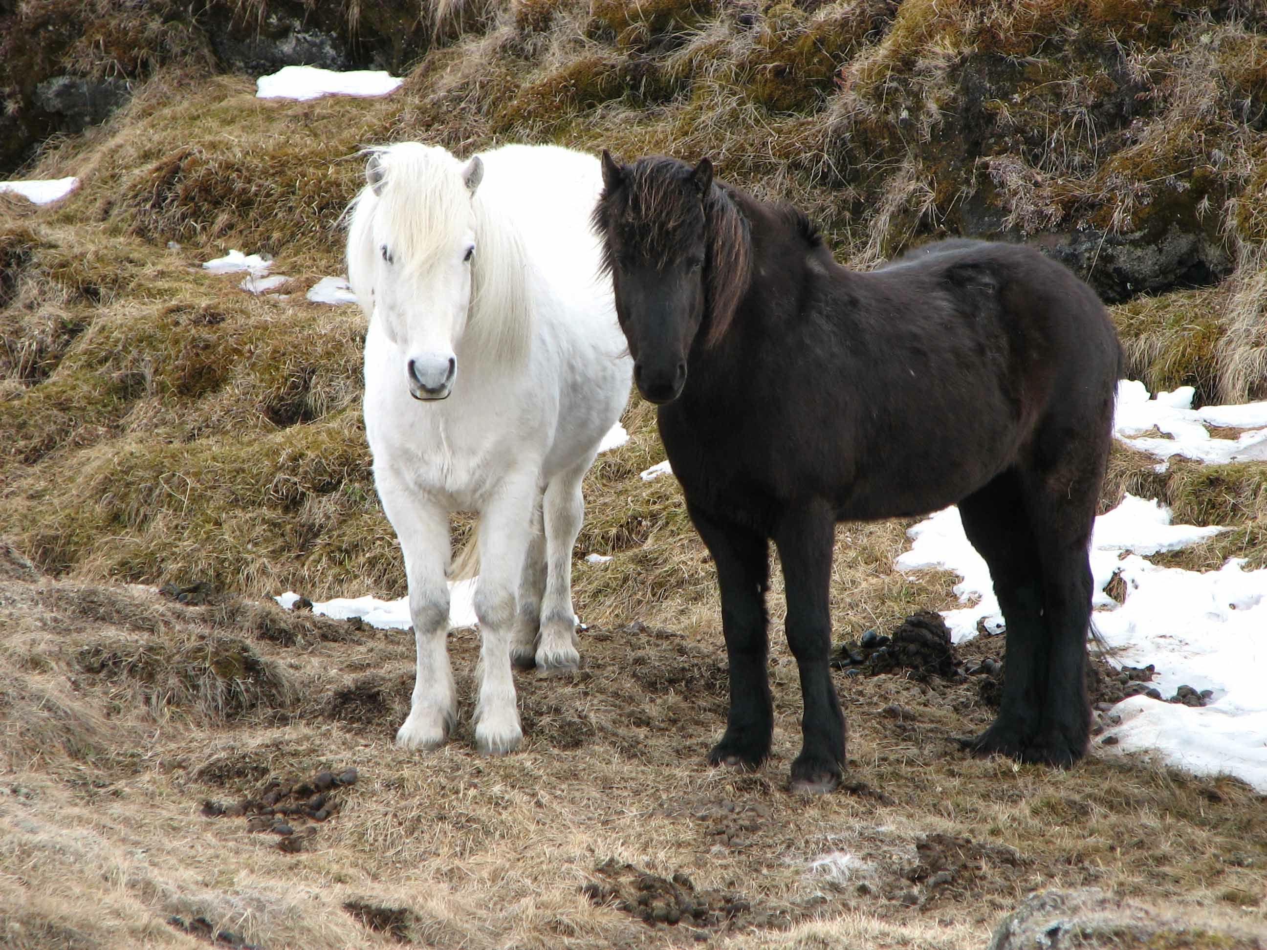 Pin auf Horses Pairs
