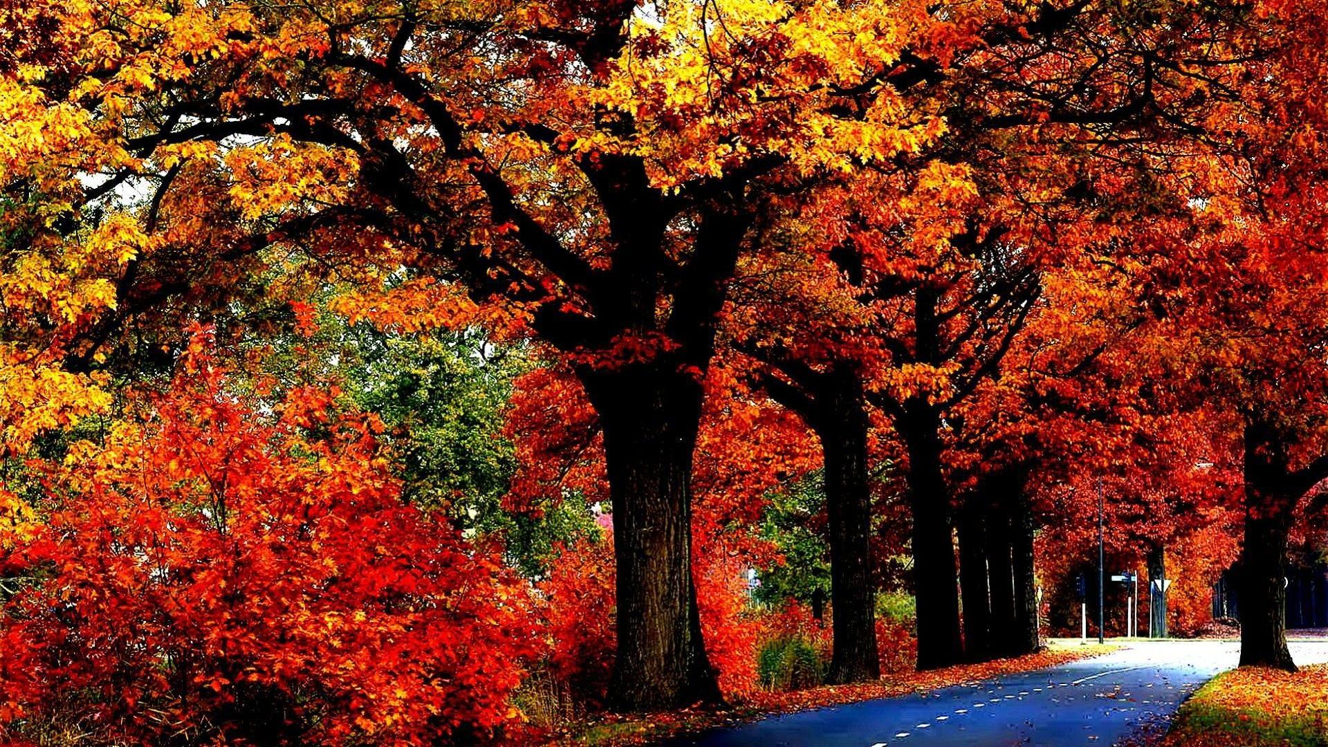 Fall Tree Autumn Nature Couleur Automne Couleur Automne