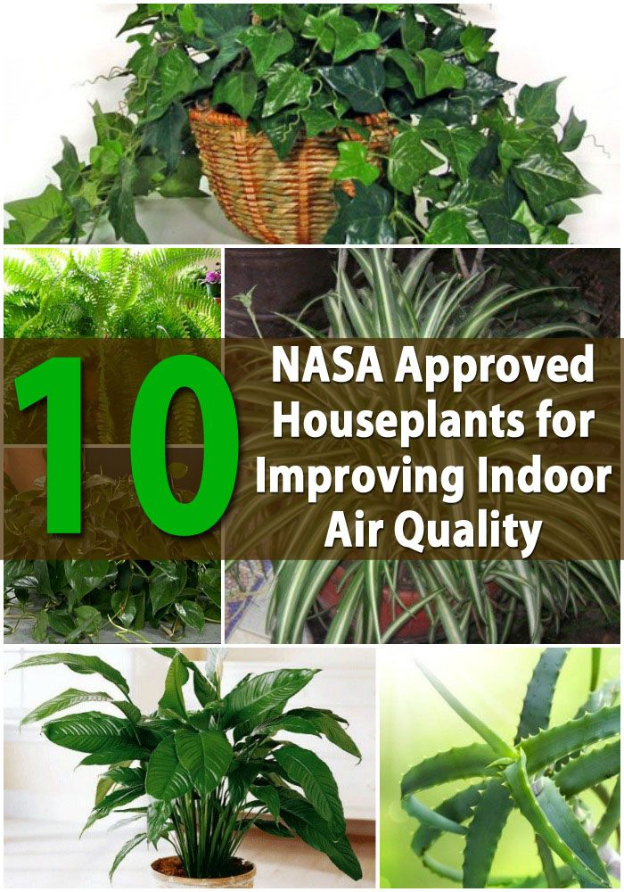 Top 10 Nasa Roved Houseplants For Improving Indoor Air Quality Plant Identification House
