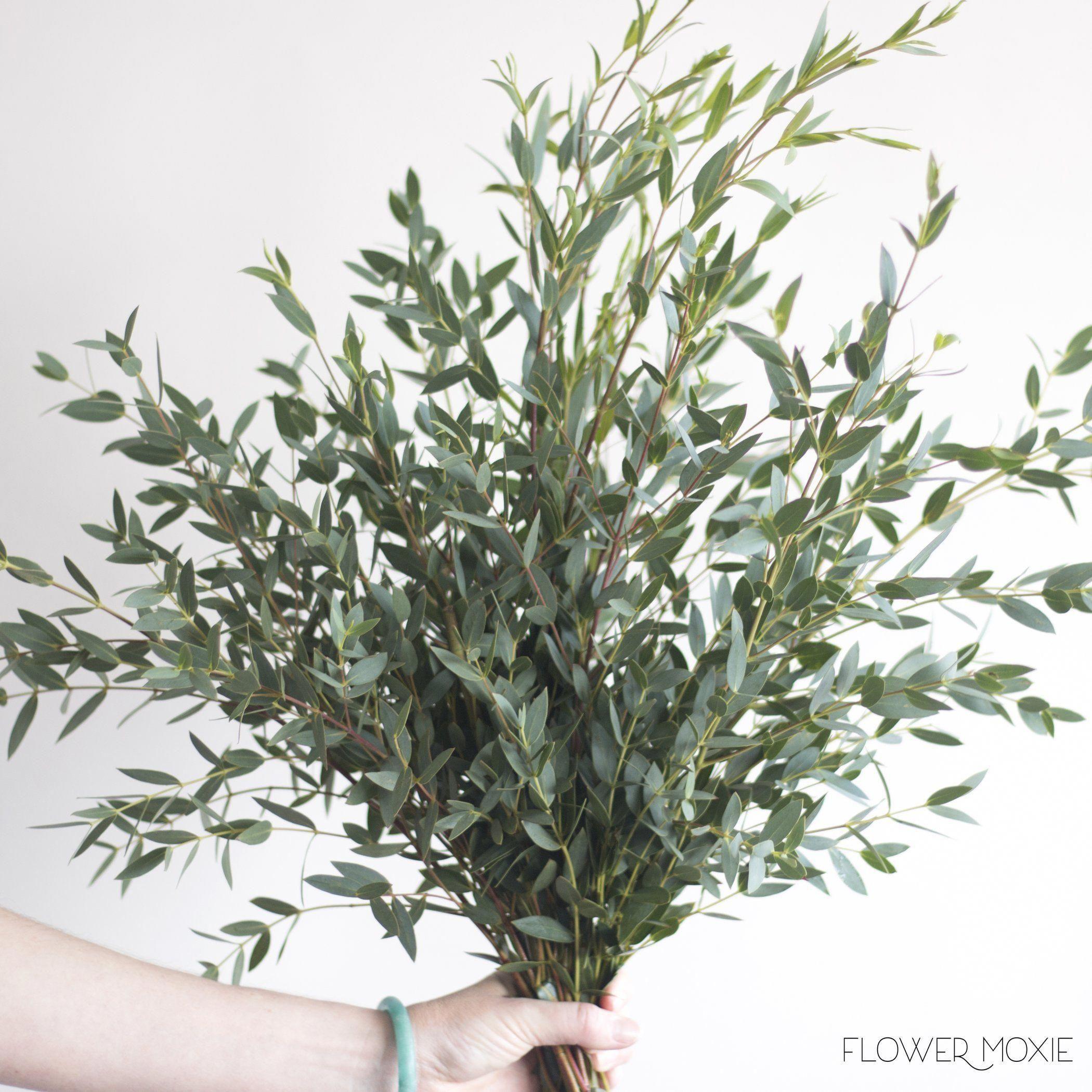 Gunni eucalyptus gunni flower moxie diy wedding flowers