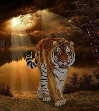 Amazing wildlife - Tiger photo #tigers