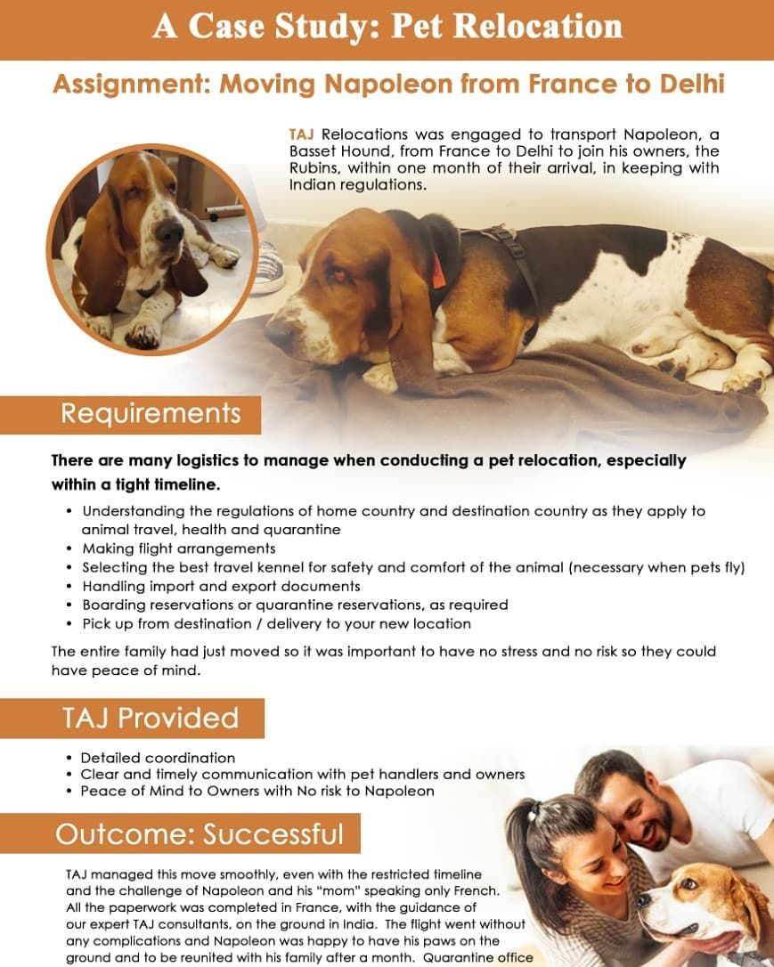 A Case Study Pet Relocation Assignment Moving Napoleon From