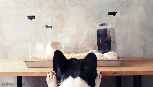 Pin by Yadira Garcia on Hamster Pet cage, Syrian hamster
