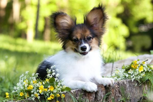 If You Re Looking For A Low Maintenance Dog Take A Look At Our List Of Small Dog Breeds With Short Hair Cute Animals Cute Dogs Pets