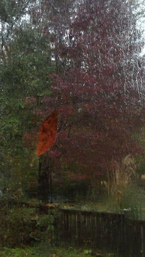 backyard trees during hurricane Sandy